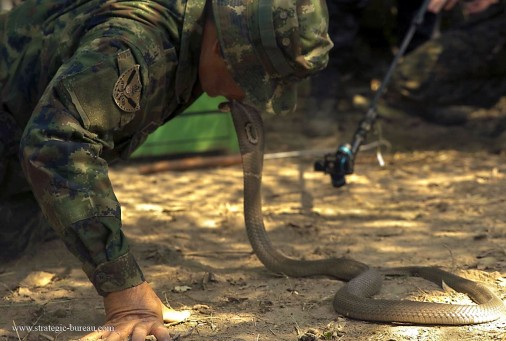 Thai cobra A001