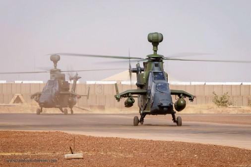 Tigre-Mali-001