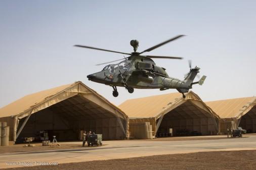 Tigre-Mali-002