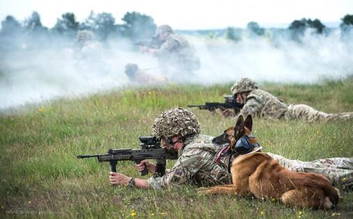 SA80_chien_UK_A101