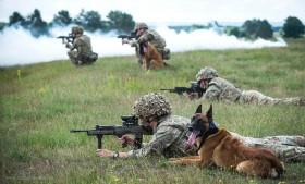 SA80_chien_UK_A102